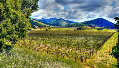 napa-valley-winter-mars-lasar