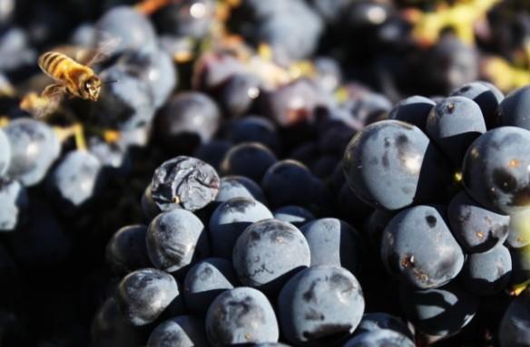 grapes-640x420