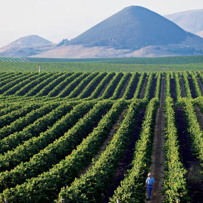 paragon-vineyard-l